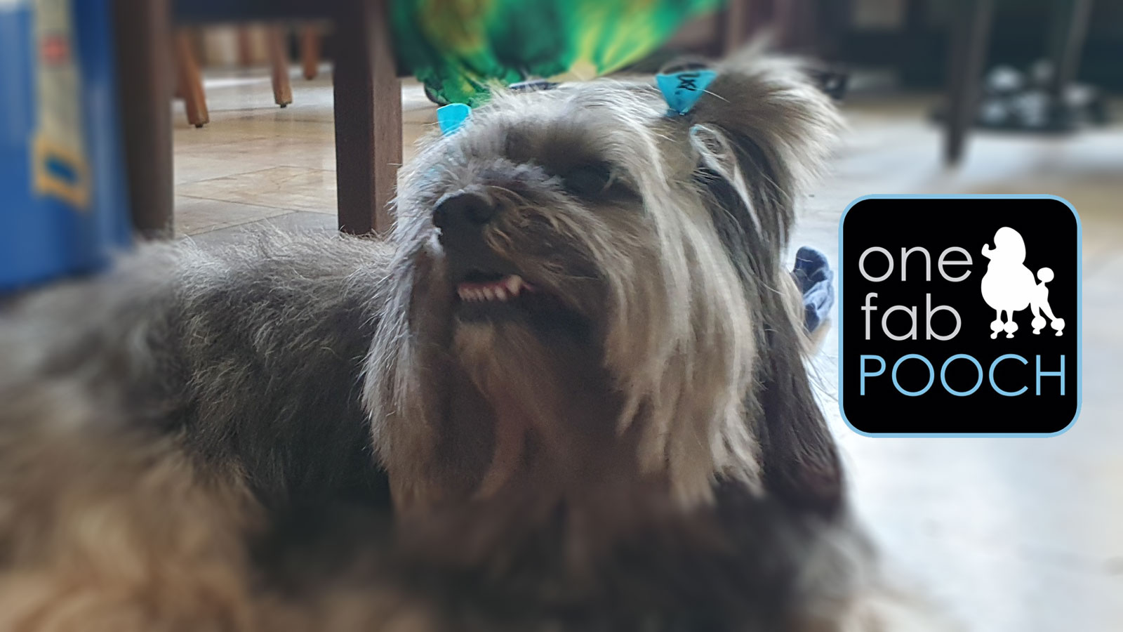 One Fab Pooch, A Review
