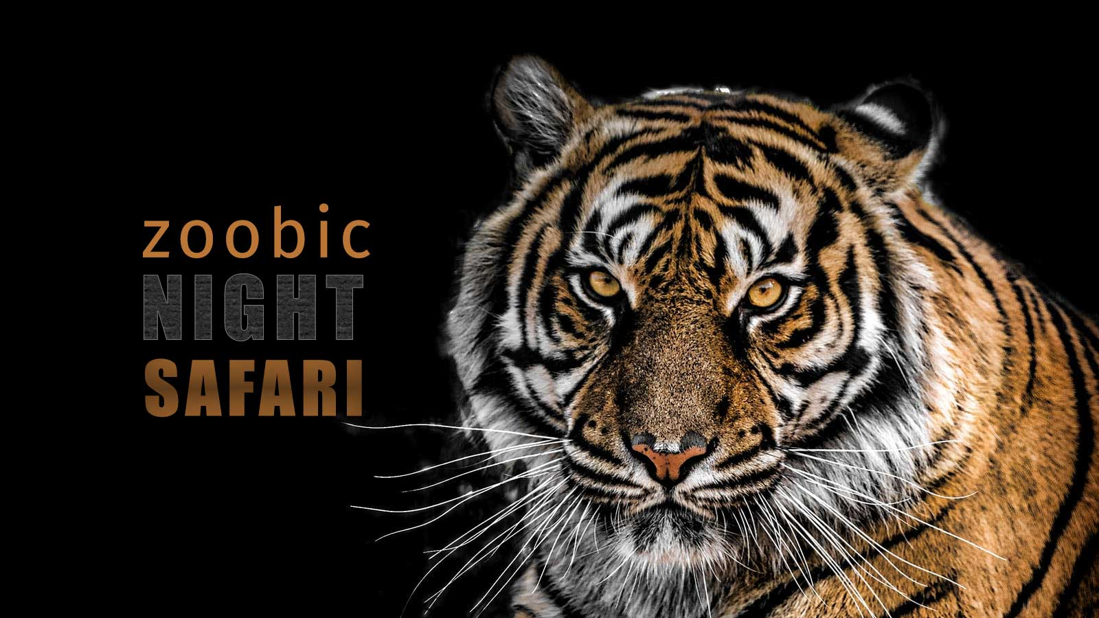 Zoobic Night Safari 2019